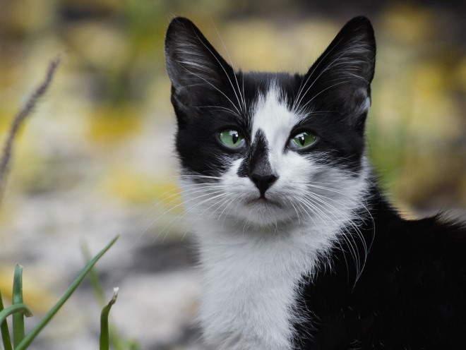 Кошка смотрит с прищуром
