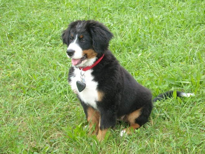 Собака сидит на траве