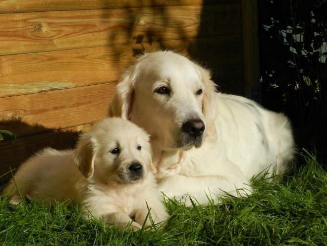 Собака со своим щенком лежат на траве