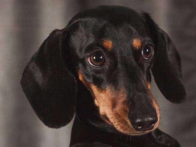 Добрый взгляд у собаки