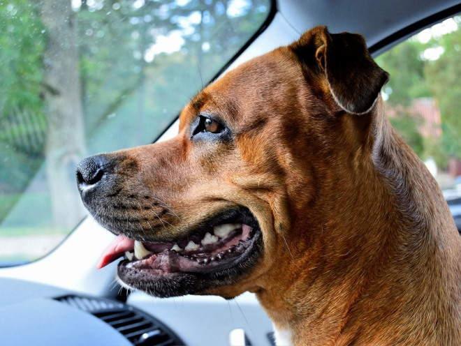 Собака сидит на пассажирском кресле в машине