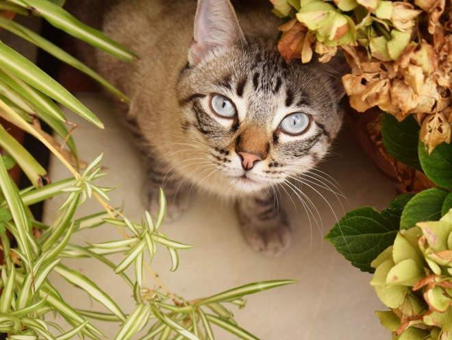 Кошка сидит среди цветов