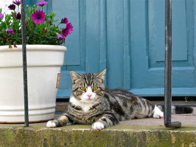 Кошка лежит у цветочного горшка