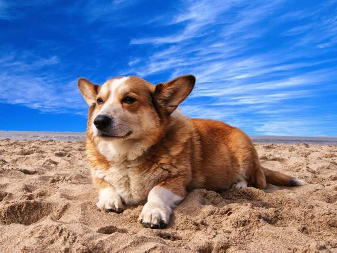 Собака лежит на пляже