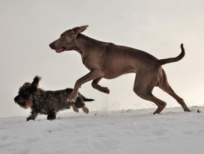 Собаки бегают вместе на улице