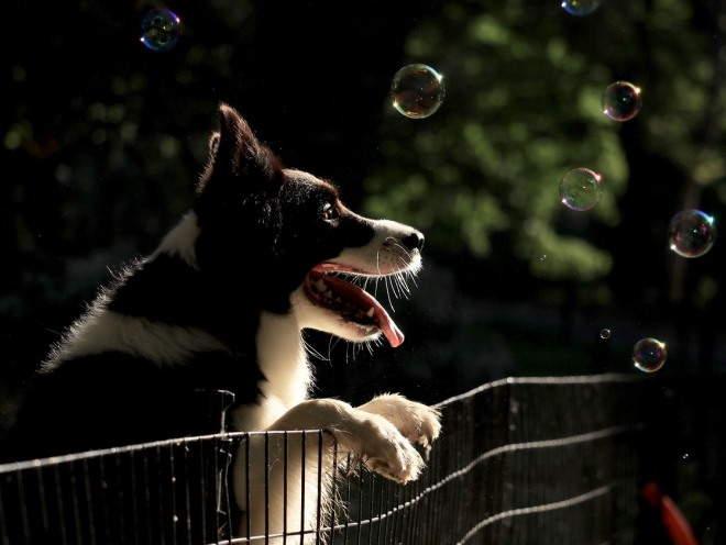 Собака хочет играть