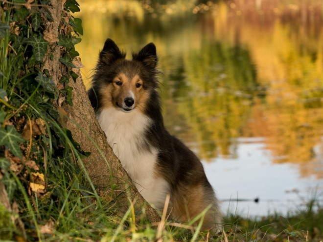 Собака сидит у дерева