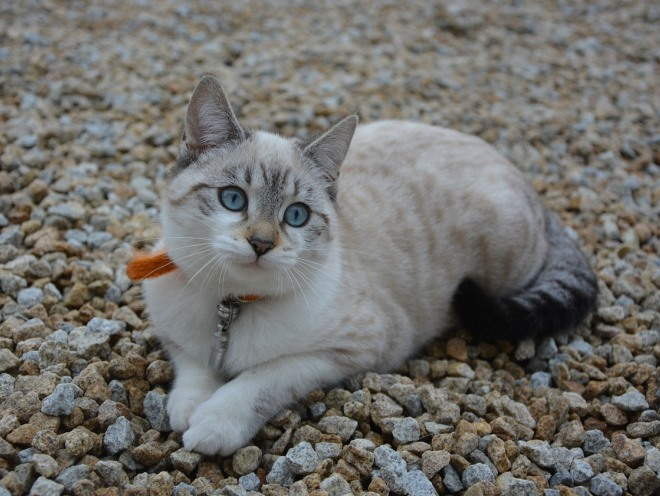 Кот лежит на камнях на улице
