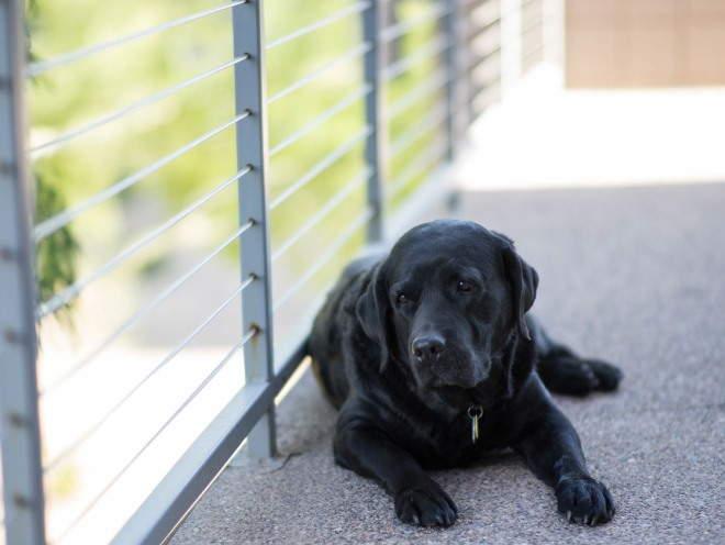 Собака отдыхает на балконе
