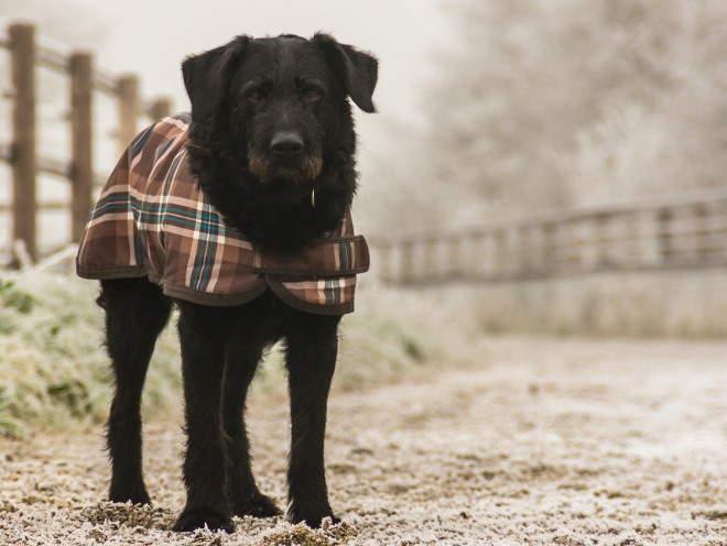 Собака гуляет в холодную погоду