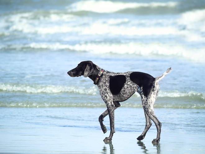 Собака бегает у воды