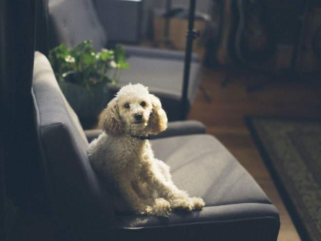 Собака сидит на кресле