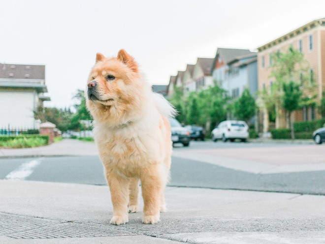 Собака на прогулке в городе