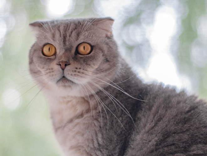 Кошка сидит у окошка
