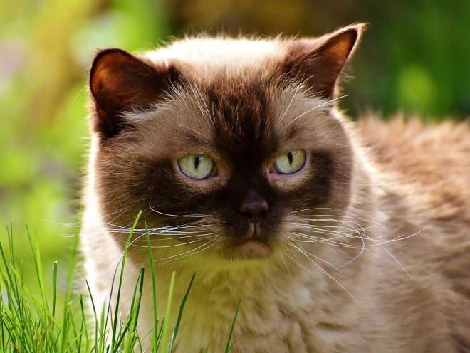 Кот гуляет в саду