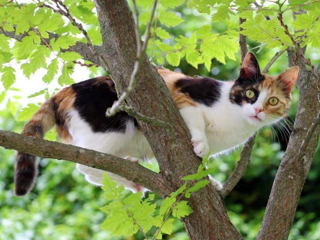 Кошка залезла на дерево