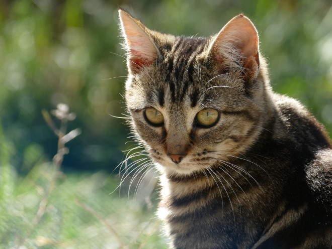 Кошка гуляет на свежем воздухе