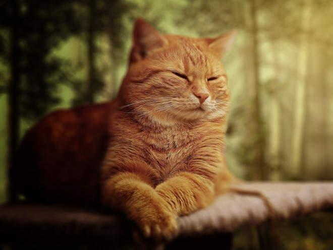 Кошка закрыла глаза