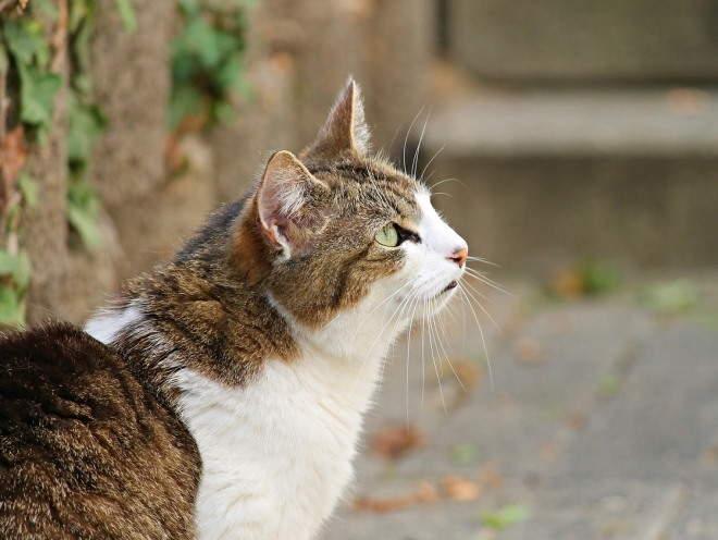 Кот что-то увидел на улице