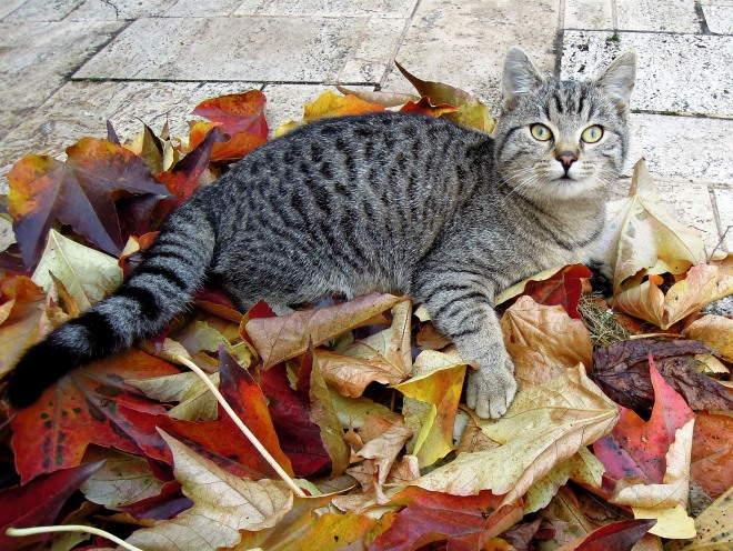Кот улегся на улице