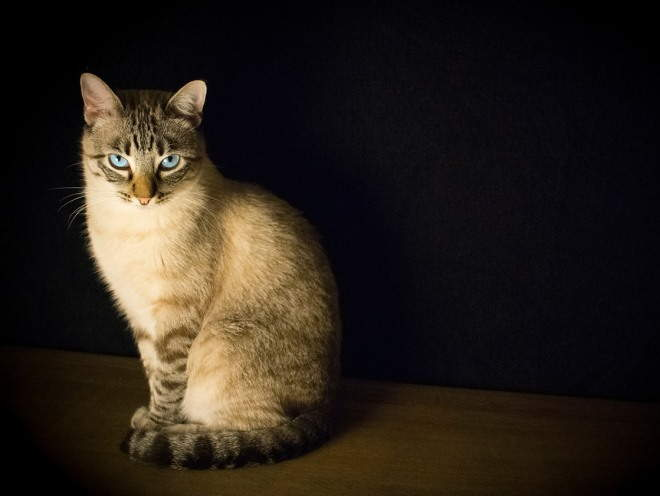 Кошка сидит в темноте