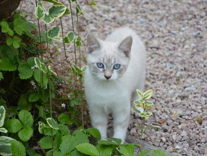 Котенок гуляет в саду