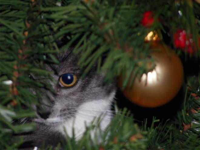 Кошка сидит за елкой