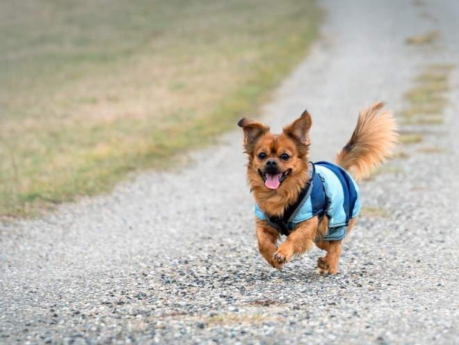 Собака бежит по дороге