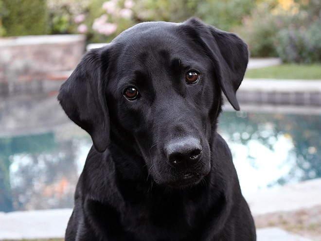 Собака сидит у бассейна