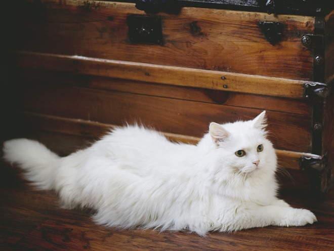 Кошка лежит на полу
