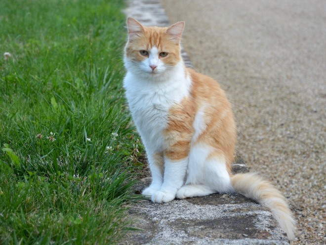 Кот сидит у края дороги