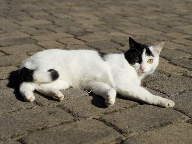 Кошка лежит на солнце