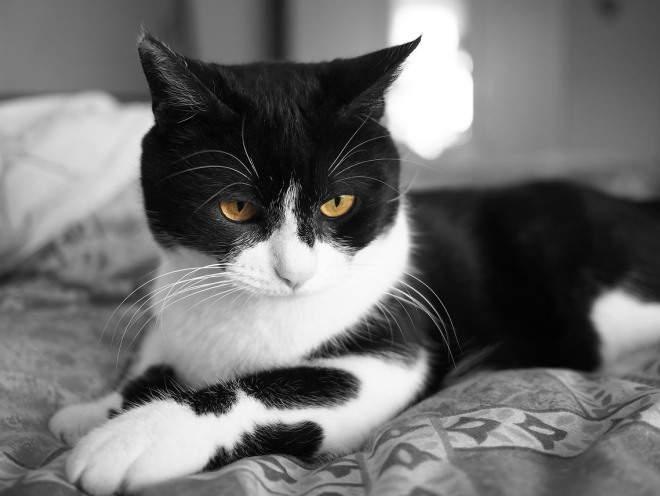 Кот лежит на кровати в спальне