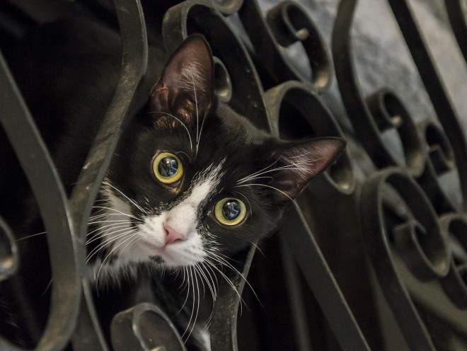 Любопытная кошка смотрит