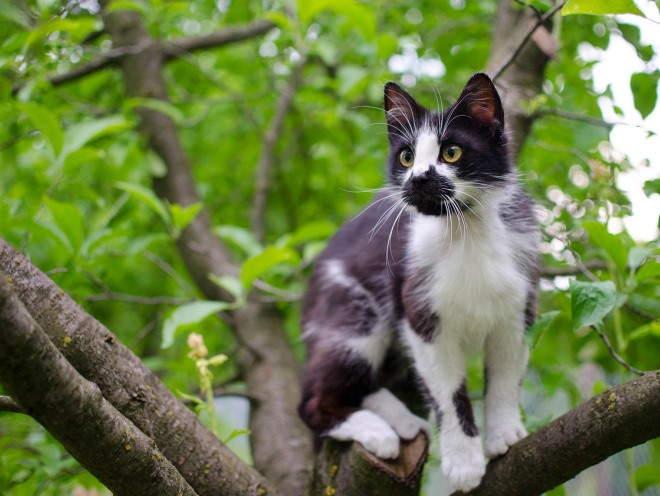 Кот залез на дерево