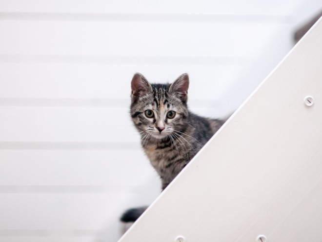 Кот ходит по лестнице