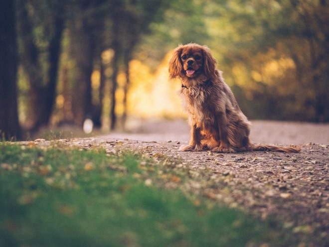 Собака на выгуле в парке