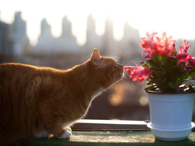 Кошка сидит на балконе