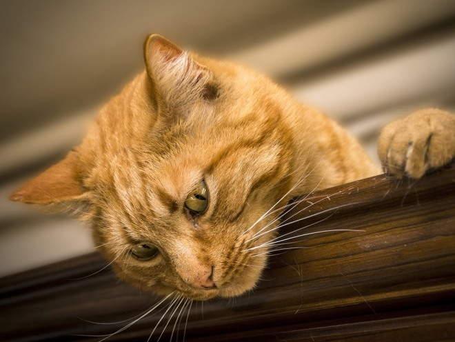 Кошка забралась на шкаф