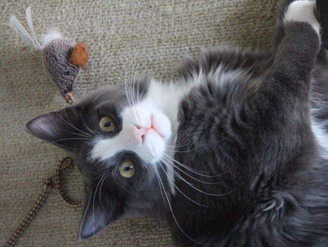 Кот играет на полу