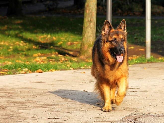 Собака на прогулке в жаркую погоду