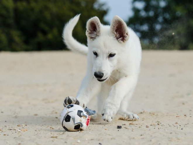 Собака играет на пляже