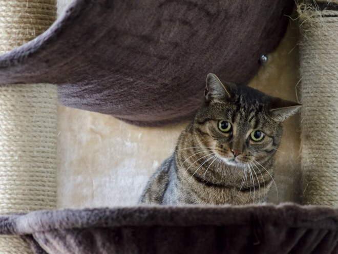 Кошка сидит в игровом домике