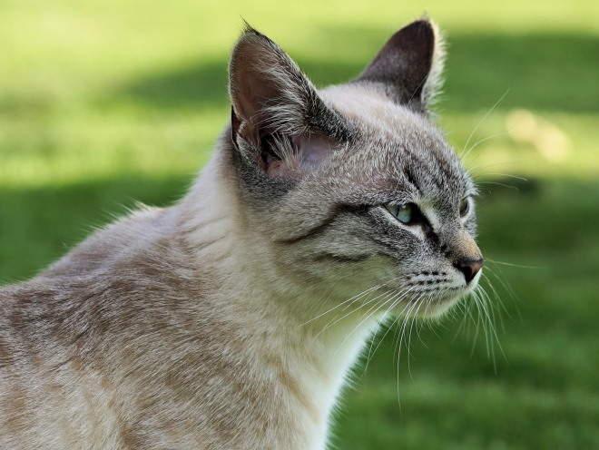 Кошка гуляет по саду