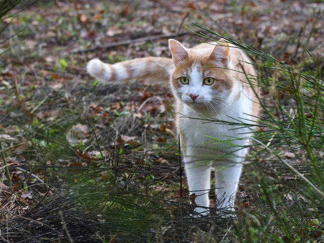 Кот гуляет на природе