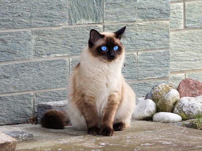 Кот сидит у дома