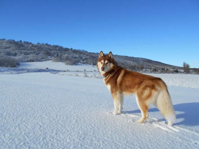 Собака гуляет на улице зимой