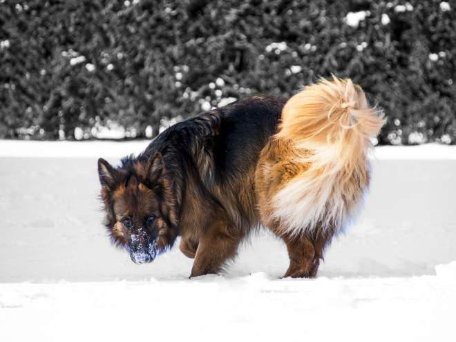 Собака зимой на прогулке