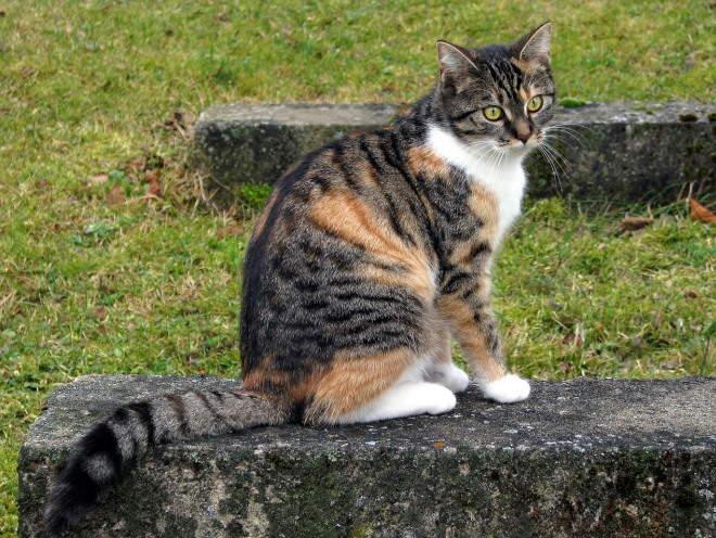 Кошка сидит на каменной плите