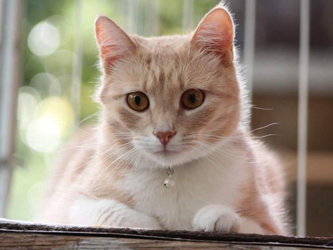 Кошка смотрит сверху